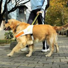 Cantabria aprueba una ley  de  acceso con perros de asistencia a centros públicos, privados y servicios de transporte